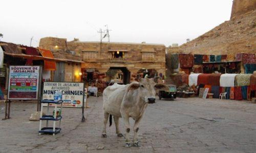INDIE / Rajasthan / Jaisalmer - pustynia Thar / stali bywalcy