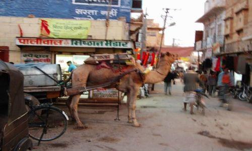 INDIE / Rajasthan / Jaisalmer - pustynia Thar / transport towarowy...