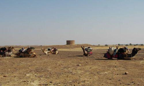INDIE / Rajasthan / Jaisalmer - pustynia Thar / w drodze...
