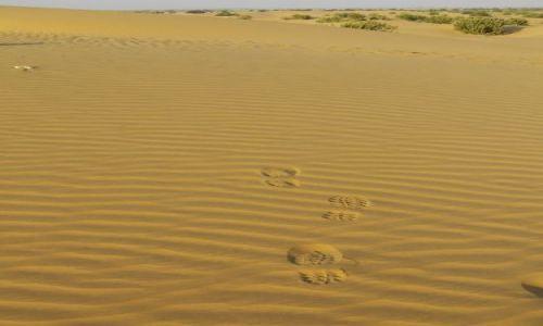 INDIE / Rajasthan / Jaisalmer - pustynia Thar / ślady:-)