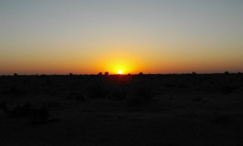 INDIE / Rajasthan / Jaisalmer - pustynia Thar / wschód słońca na pustyni Thar