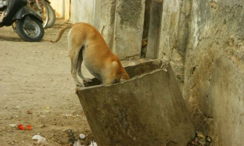 Zdjęcie INDIE / Junagadh / Junagadh / Po  śniadanie