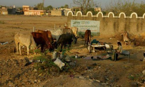 Zdjęcie INDIE / Jamnagar / Jamnagar / Cały dobytek