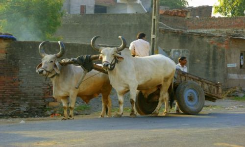 Zdjęcie INDIE / Jamnagar / Jamnagar / Ciężarówki