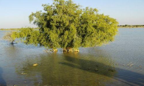INDIE / Rajasthan / Jaisalmer - pustynia Thar / nad brzegiem...