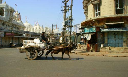 Zdjęcie INDIE / Jumnagadar / Jumnagadar / Jedzie