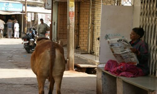 Zdjęcie INDIE / Bhujodi / Bhujodi / Czytelnia