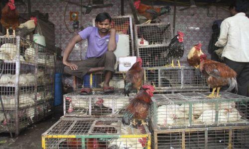 Zdjęcie INDIE / dehli / old dehli / kurczaki