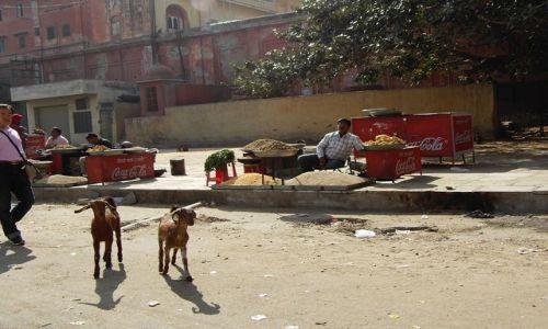 INDIE / Rajasthan / Jaipur / uliczni sprzedawcy