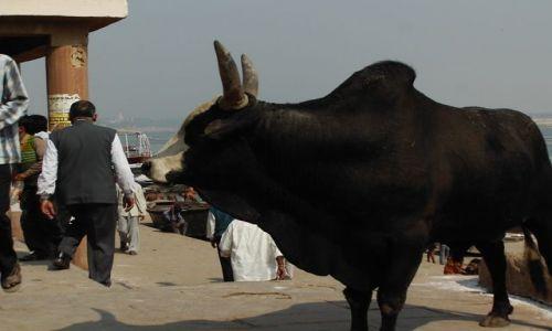 Zdjecie INDIE / Uttar Pradesh / Varanasi / świętobliwy