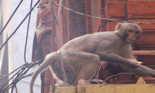 INDIE / Uttar Pradesh / Varanasi / mieszczuchy...