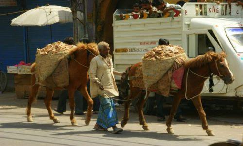 Zdjecie INDIE / Ahmamabad / Ahmamabad / Transport