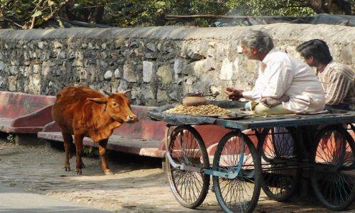 INDIE / Uttaranchal / Rishikesh / w zgodzie