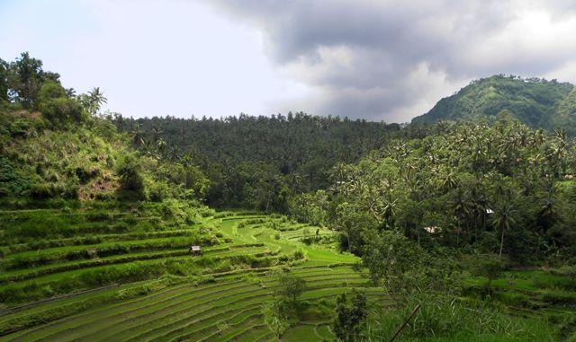 Zdjęcia: okolice Amed, Bali, Tarasy ryżowe 4, INDONEZJA