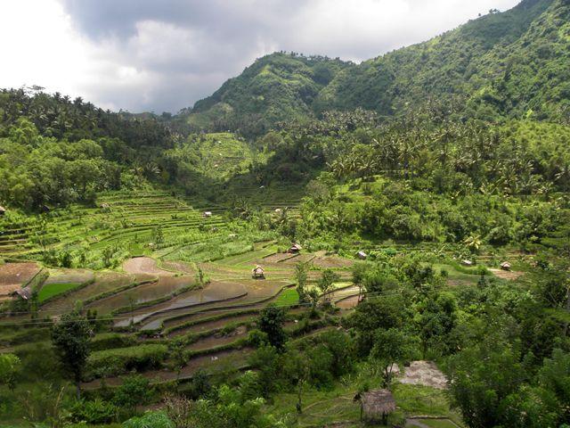 Zdjęcia: okolice Amed, Bali, Tarasy ryżowe 5, INDONEZJA