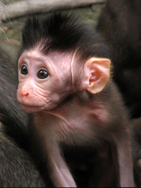Zdjęcia: Ubud, Monkey Forrest, Bali, Małpy z Ubud 3, INDONEZJA