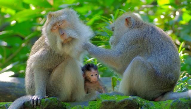 Zdjęcia: Ubud, Bali, Rodzinka, INDONEZJA