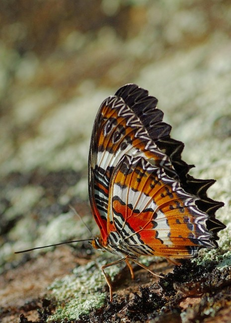 Zdjęcia: Bali, Bali, Indonezyjskie motyle 2, INDONEZJA