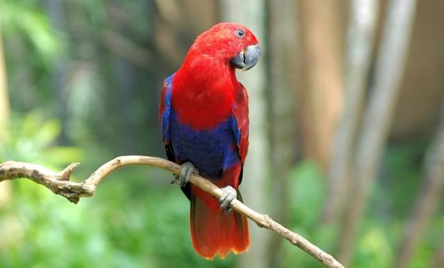 Zdjęcia: Park Ptaków i Gadów, Bali, Park Ptaków i Gadów, INDONEZJA
