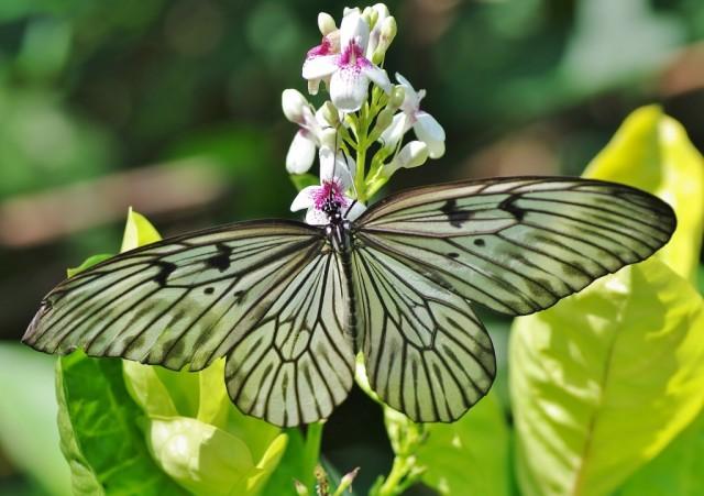 Zdjęcia: Bali, Bali, Indonezyjskie motyle 1, INDONEZJA