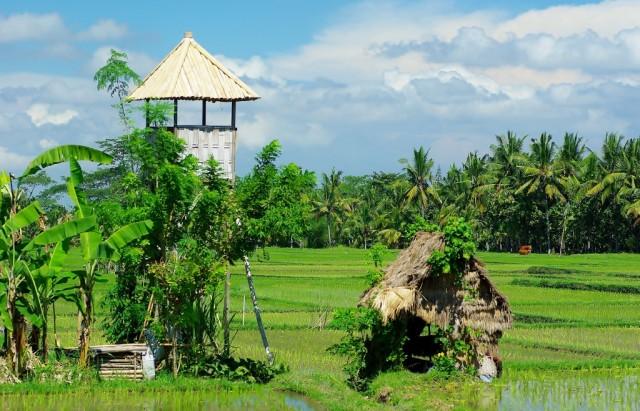 Zdjęcia: Ubud, Bali, Okolice hotelu Tegal Sari-Ubud(Bali), INDONEZJA