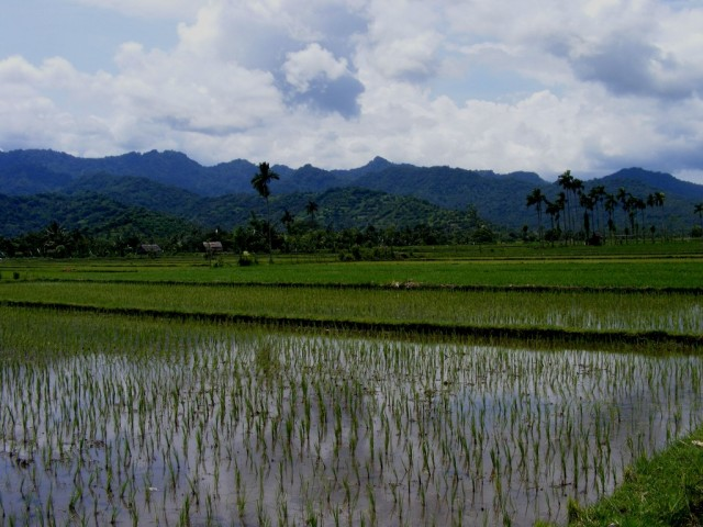 Zdjęcia: Jawa, Jawa, Jawa, INDONEZJA