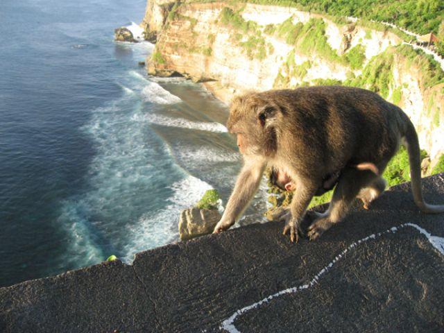Zdjęcia: Sumba, Sumba, Małpka, INDONEZJA