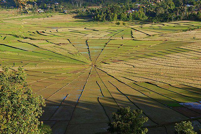 Zdjęcia: Ruteng, Wyspa Flores, Pajęczyna, INDONEZJA