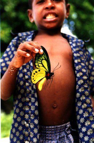 Zdjęcia: Biak, West Papua, Motyl, INDONEZJA