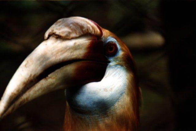 Zdjęcia: Bosnik, West Papua, Kto tu jest bardziej ciekawy...., INDONEZJA