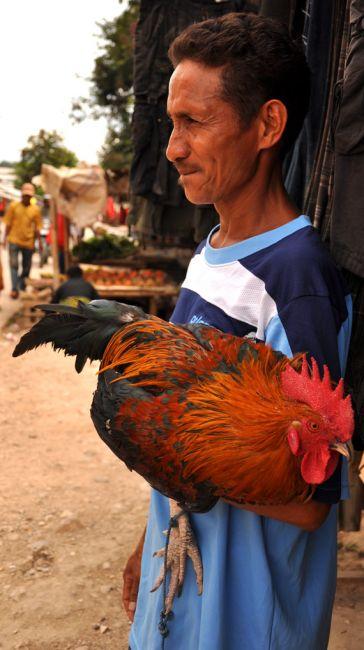 Zdjęcia: Baucau, Demokratyczna Republika Timor Leste, Pan z Kogutem (ulubieńcem Timorczyków) 1 , INDONEZJA