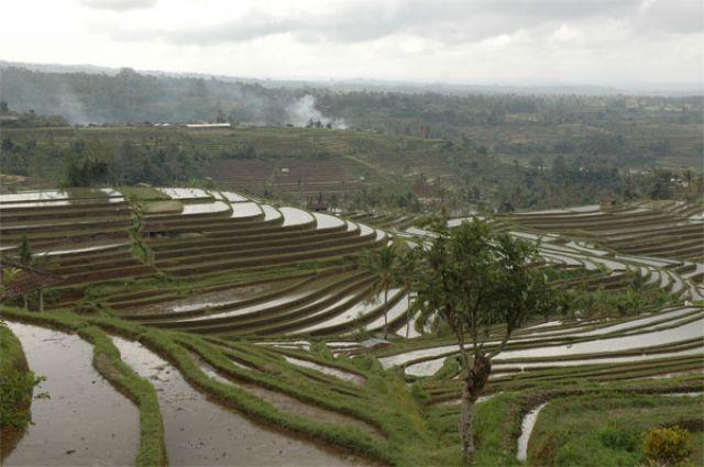 Zdjęcia: okolice Ubud, Bali, Pola ryżowe, INDONEZJA