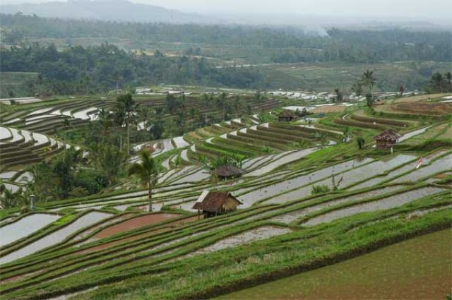 Zdjęcia: centrum wyspy, Bali, Tarasy ryżowe, INDONEZJA