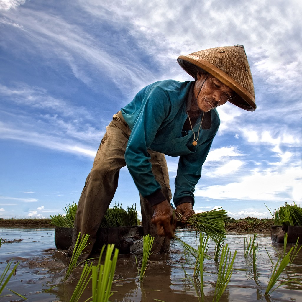 Zdjęcia: poludniowy zachod wyspy, Bali  , sadzenie ryzu, INDONEZJA