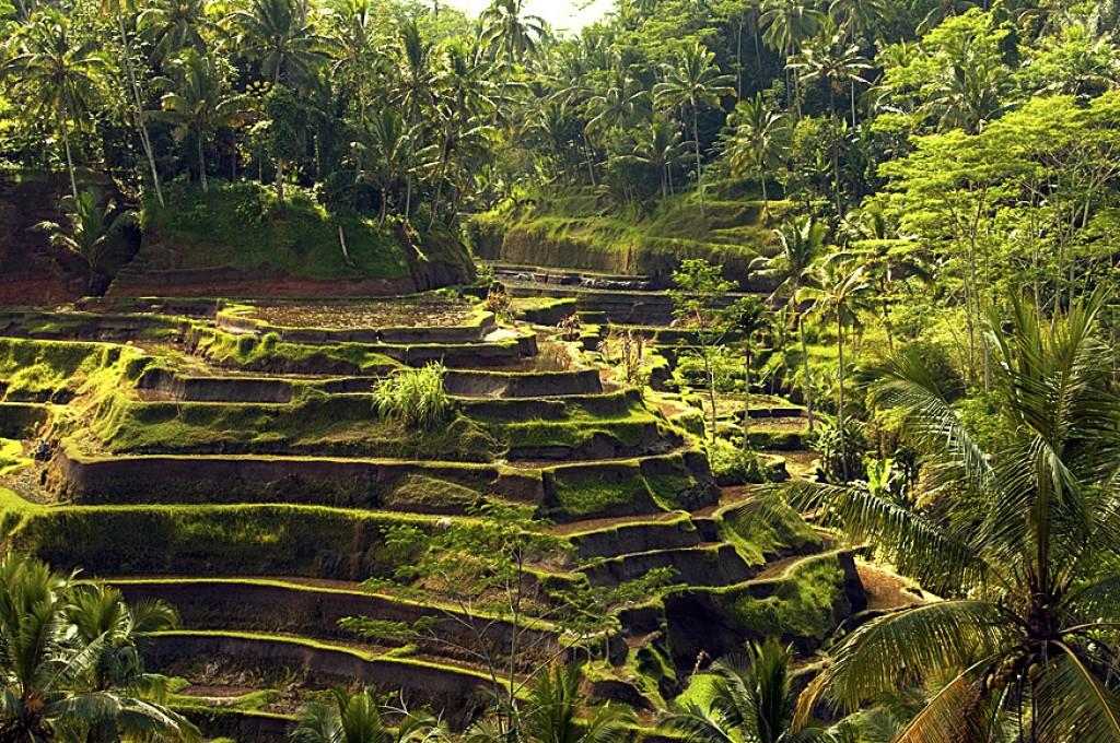 Zdjęcia: Bali, Tegalalang, balijskie tarasy ryżowe, INDONEZJA