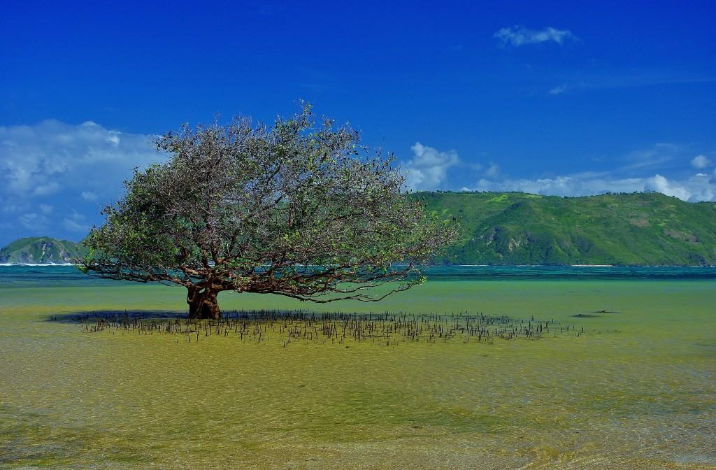 Zdjęcia: Południe wyspy., Lombok, Południowy Lombok, INDONEZJA