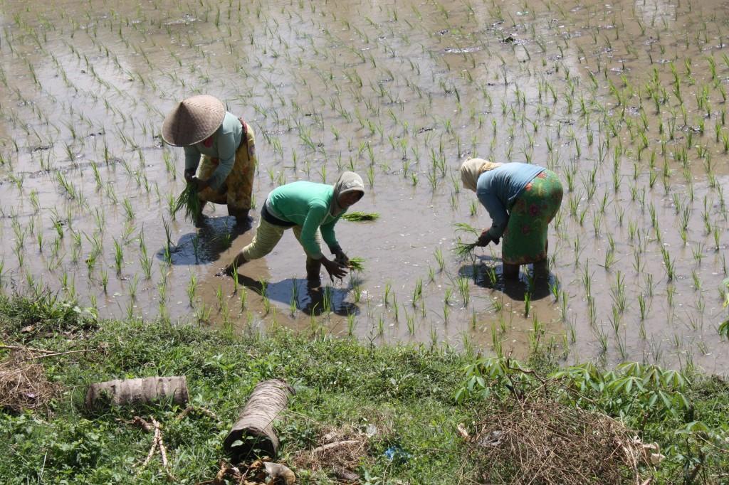 Zdjęcia: LOMBOK, KONKURS, INDONEZJA