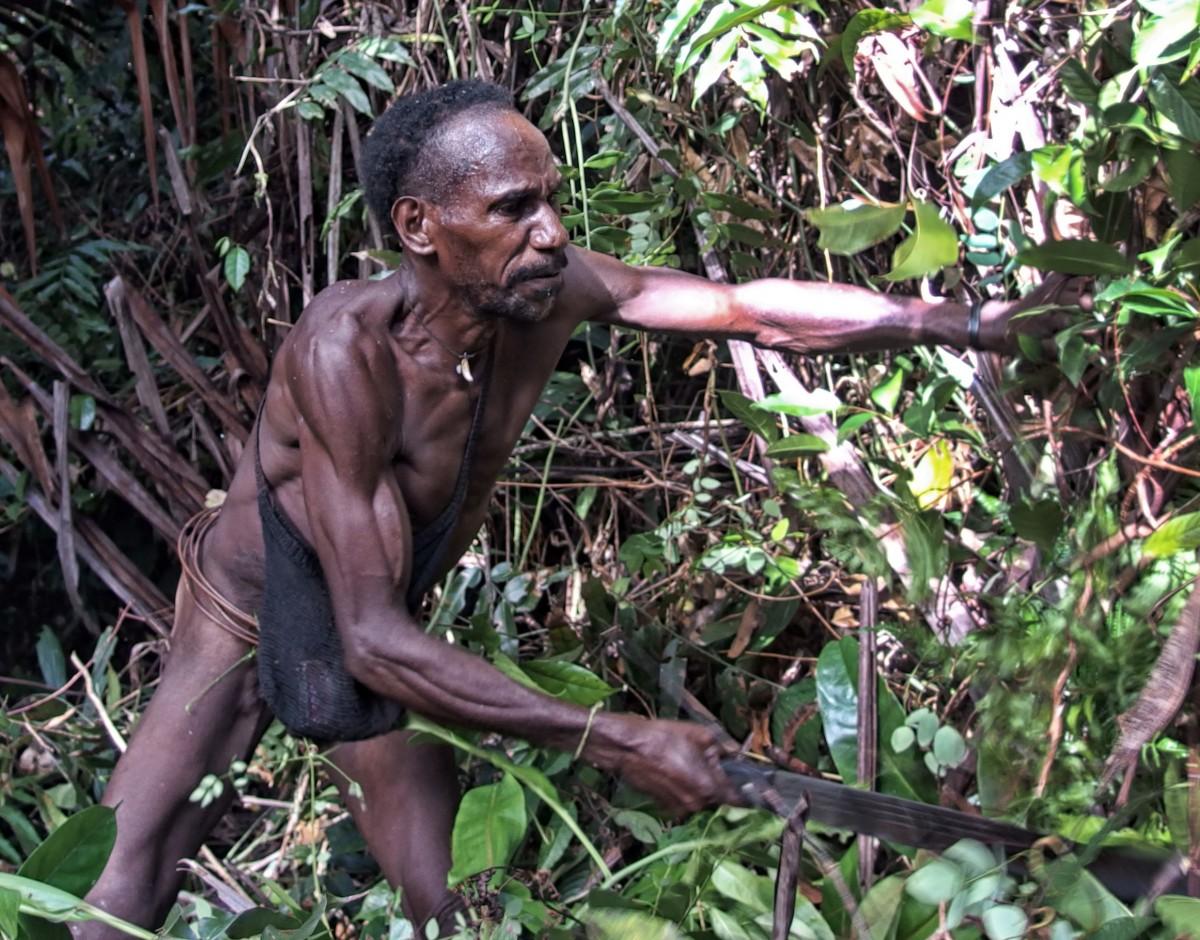Zdjęcia: las deszczowy, dwa dni drogi od wioski Mabul, Papua Zachodnia, Korowaj - wyciana ścieżkę maczetą, INDONEZJA