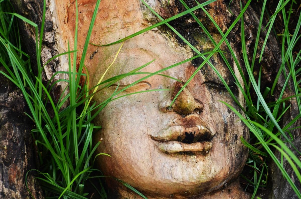 Zdjęcia: Ubud, Gianyar, W trawie, INDONEZJA