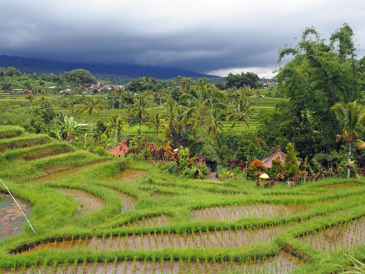 Zdjęcia: Jatiluwih, Bali, Pola ryżowe (III), INDONEZJA