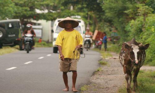 Zdjecie INDONEZJA / Lombok / Lombok / krowi spacer