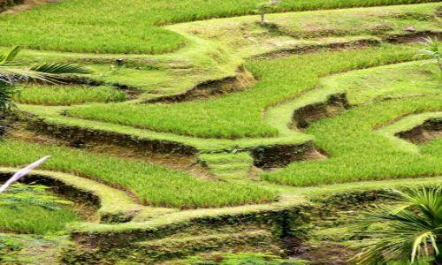 Zdjęcie INDONEZJA / Bali / Ubud / Tarasy