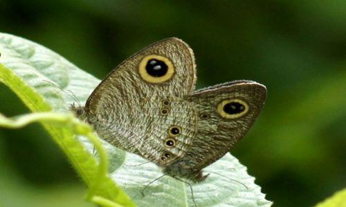Zdjecie INDONEZJA / Sumatra / Bukit Lawang / W świecie motyli