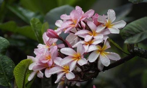Zdjecie INDONEZJA / Bali / Sanur / W świecie kwiatów