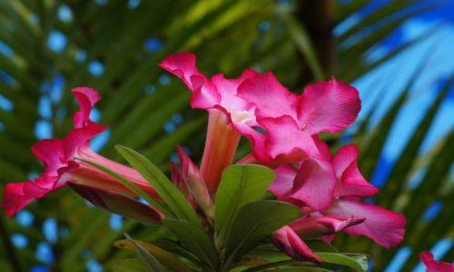 Zdjecie INDONEZJA / Sumatra / Medan / W  świecie kwiatów
