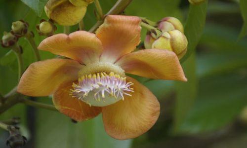 Zdjecie INDONEZJA / Bali / Denpasar / W świecie kwiatów