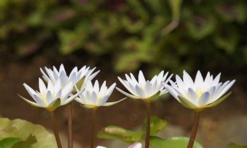 Zdjęcie INDONEZJA / Bali / Ubud / W świecie kwiatów