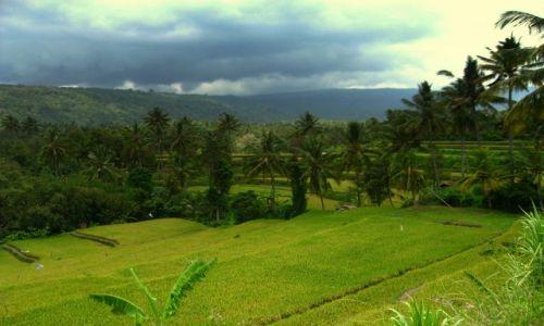 Zdjecie INDONEZJA / - / Bali / Pola ryżowe
