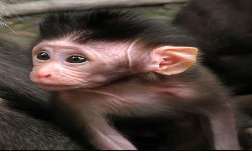 INDONEZJA / Bali / Ubud, Monkey Forrest / Małpy z Ubud 3