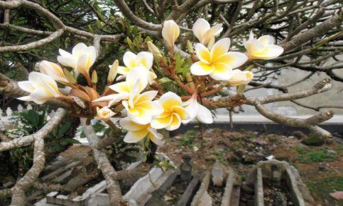 Zdjęcie INDONEZJA / sumatra / ,, / kwiaty